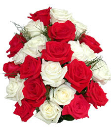 white-and-red-roses