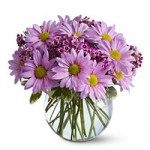 Delightful Daisy by USA Florist
